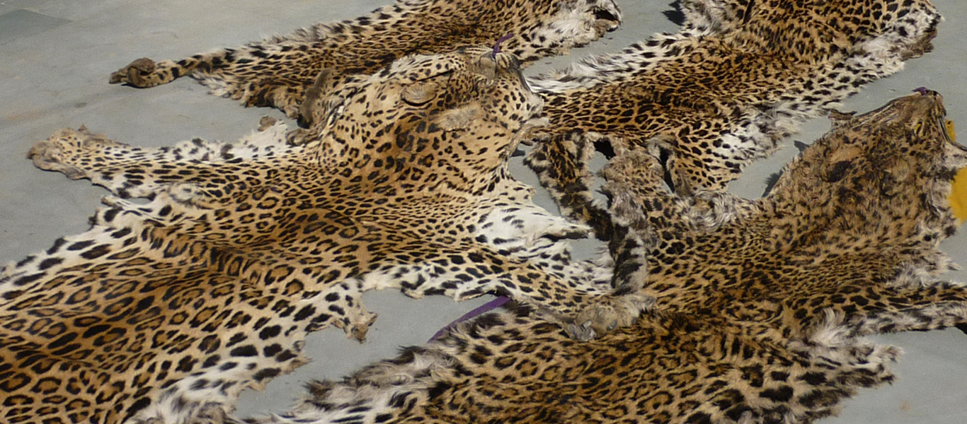 Poached skins of endangered wildlife