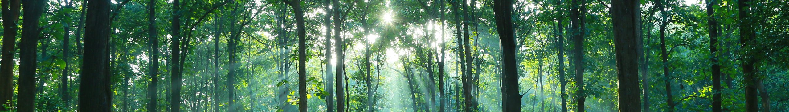 Teak Forest Lights